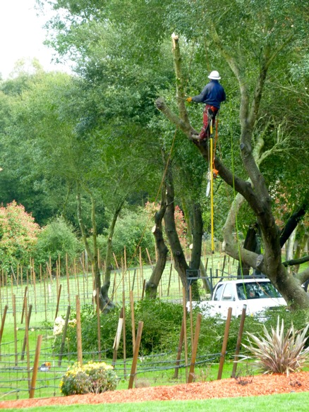 tree trimming 3 11 11