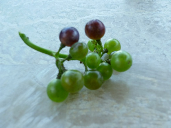 First grapes
