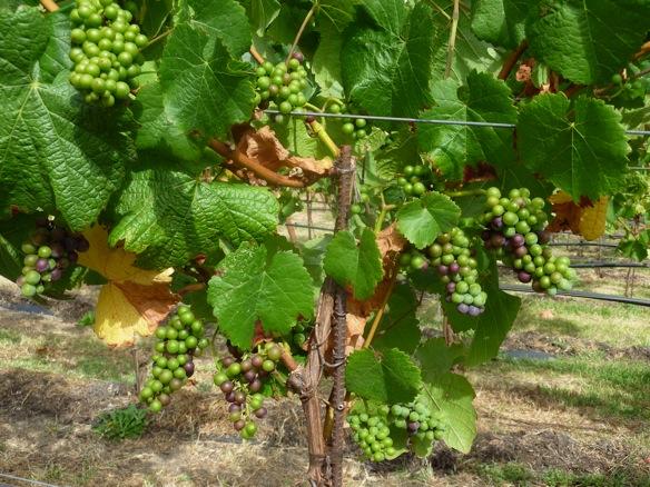 best vine