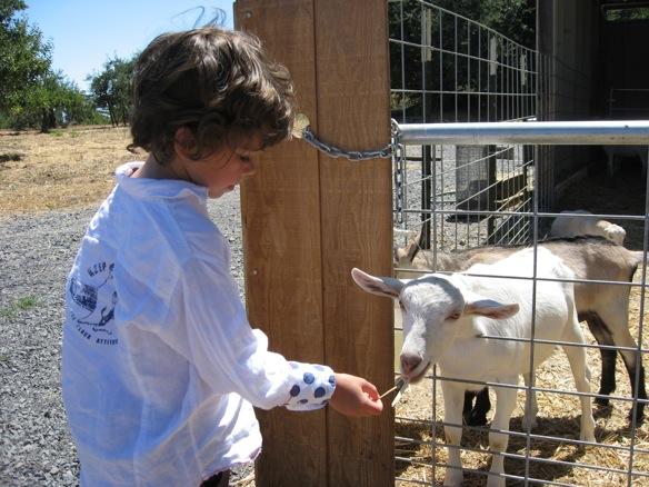 xavier goat