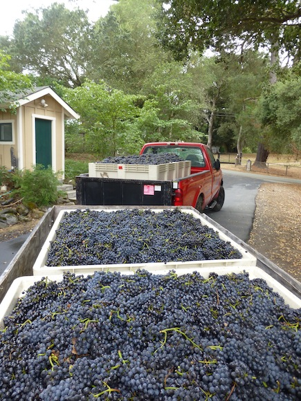 Truck with grapes