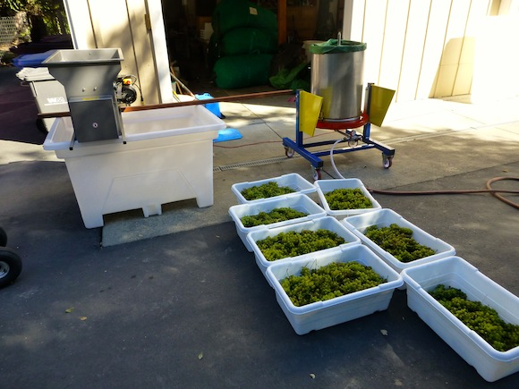 grapes and press