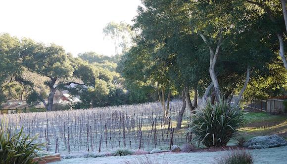 Winter 2015 Vineyard