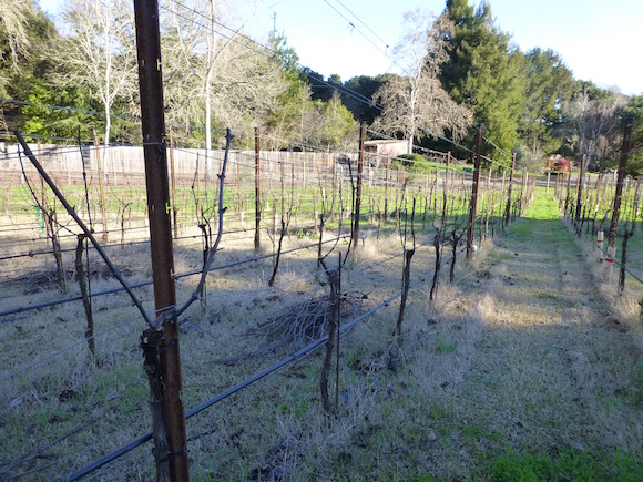 pruned row